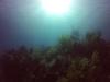 diving (20)