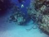 diving (22)